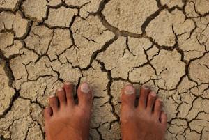 heel wat voeten in aarde